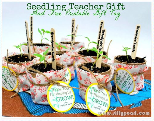Seedling Teacher Gift With Printable