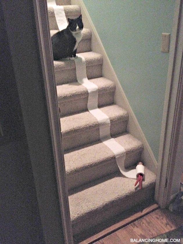 elf-on-the-shelf-toilet-paper-roll